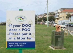 Dog Poo Poster